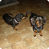 Adopt A Pet :: Scootie and Dixie (bonded pair - Lawndale, NC