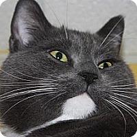 Adopt A Pet :: Spyke (LE) - Little Falls, NJ
