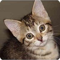 Adopt A Pet :: Celeste - Lake Charles, LA
