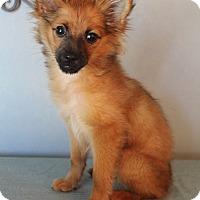 Adopt A Pet :: Rafiki - Wytheville, VA