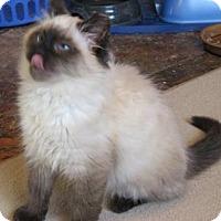 Adopt A Pet :: Turisimo - Davis, CA