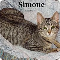 Adopt A Pet :: Simone - Bentonville, AR