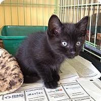 Adopt A Pet :: Seamus - Island Park, NY