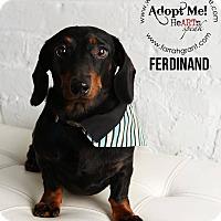 Adopt A Pet :: Ferdinand - Omaha, NE