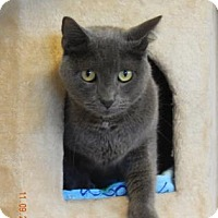 Adopt A Pet :: Taz - Fort Myers, FL