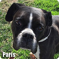 Adopt A Pet :: Paris - Encino, CA