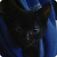 Adopt A Pet :: Sherman - Alexandria, KY