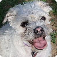 Adopt A Pet :: Mindy - Winters, CA
