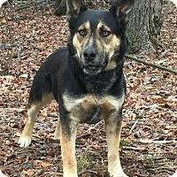 Adopt A Pet :: Ross - Brattleboro, VT