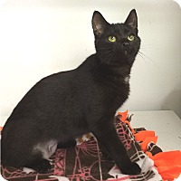 Adopt A Pet :: Arielle - Albion, NY