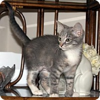 Adopt A Pet :: Whisper - Cincinnati, OH