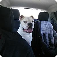 Adopt A Pet :: Bruno - Des Moines, IA