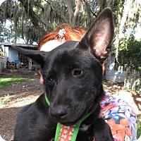 Adopt A Pet :: Babs! Love ++ - St Petersburg, FL