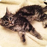 Adopt A Pet :: Qupe - Los Angeles, CA