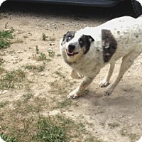 Australian Cattle Dog Mix Dog for adoption in Durham, Ontario - Buddy