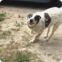Adopt A Pet :: Buddy - Durham, ON