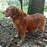 Adopt A Pet :: Ginger Green - Capon Bridge, WV