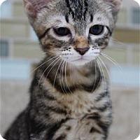 Adopt A Pet :: Ridge - Rocklin, CA