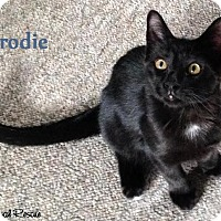 Adopt A Pet :: Brodie - Cutie Pie! - Huntsville, ON