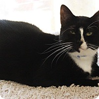Adopt A Pet :: Missy - Joplin, MO