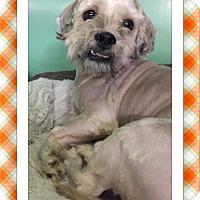Adopt A Pet :: Nicholas - IL - Tulsa, OK