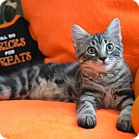 Adopt A Pet :: Oscar - Manhattan, KS