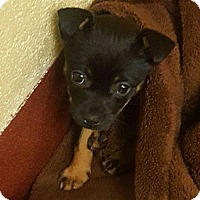 Adopt A Pet :: Jade - Accident, MD