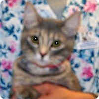 Adopt A Pet :: Ferra - Wildomar, CA