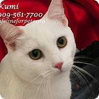 Adopt A Pet :: KUMI - Monrovia, CA
