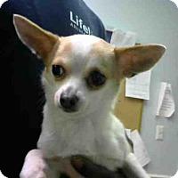 Adopt A Pet :: LONDON - Atlanta, GA