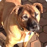 Adopt A Pet :: Elmer - Sharon Center, OH