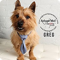 Adopt A Pet :: Greg - Omaha, NE