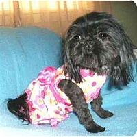 Adopt A Pet :: Libby - Mooy, AL