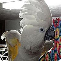 Adopt A Pet :: Halo - Shawnee Mission, KS