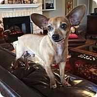 Adopt A Pet :: VOLTRON - AUSTIN, TX