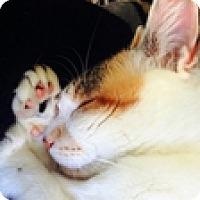 Adopt A Pet :: Pandora - Vancouver, BC