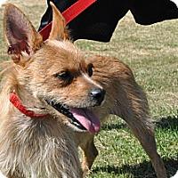 Adopt A Pet :: Roger - Tumwater, WA