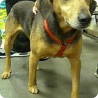 Beagle Mix Dog for adoption in Alexis, North Carolina - Cocoa