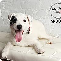 Adopt A Pet :: Snoopy - Omaha, NE