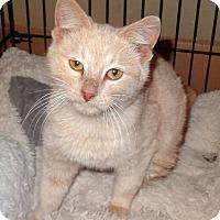 Adopt A Pet :: Bobbie - Bentonville, AR