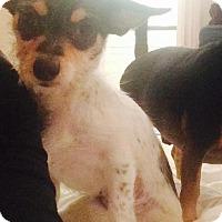 Adopt A Pet :: Olive - Las Vegas, NV