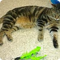 Adopt A Pet :: Hurley - Colmar, PA