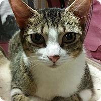 Adopt A Pet :: Pajama JMc - Schertz, TX