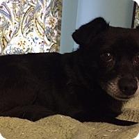 Adopt A Pet :: Davis - Homewood, AL