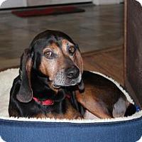 Adopt A Pet :: Flash - Howell, MI