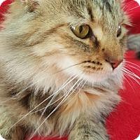 Adopt A Pet :: Ashley - Colorado Springs, CO