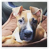 Adopt A Pet :: Valentino - West Allis, WI