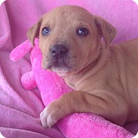 Adopt A Pet :: Emma - Hagerstown, MD