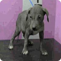 Adopt A Pet :: Sarden - Fort Collins, CO