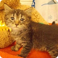 Adopt A Pet :: *LULU - Upper Marlboro, MD